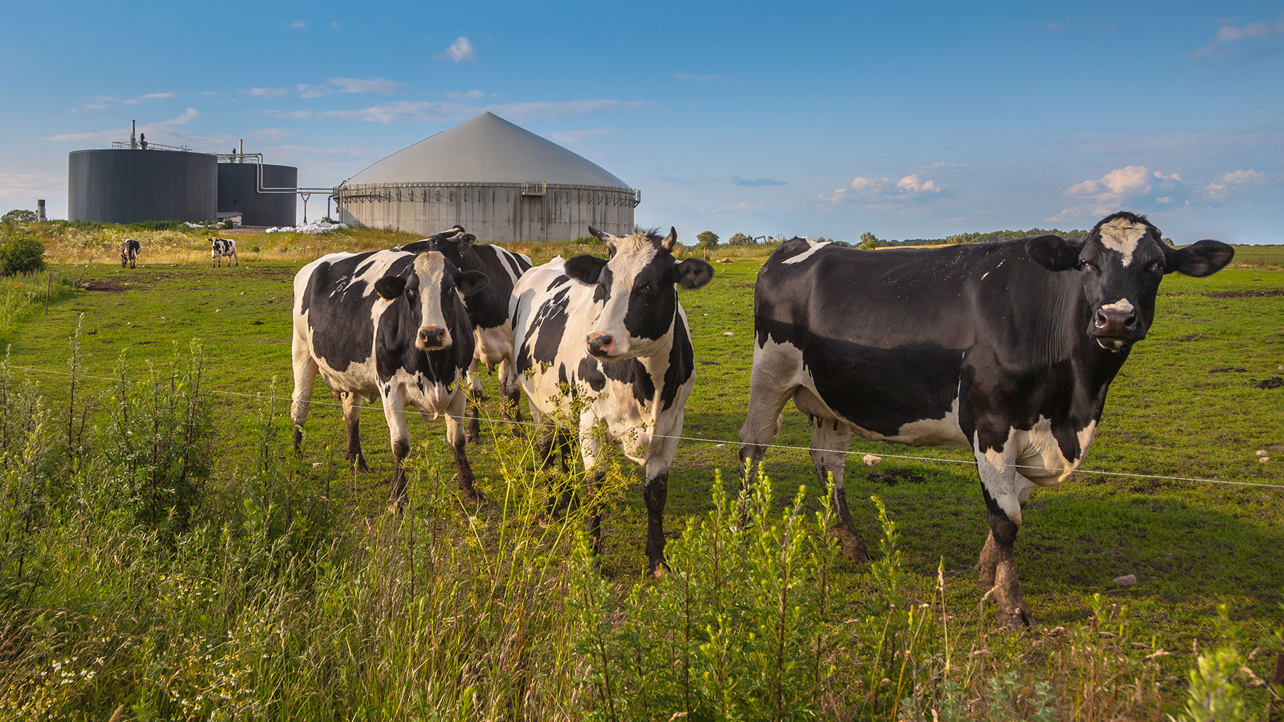 biogas-plant-with-cows-on-a-farm-l